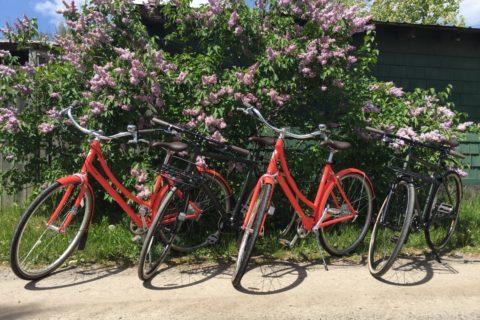 Townie Bike Rentals