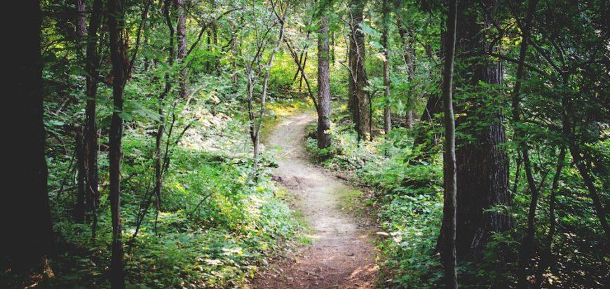Fernie Mountain Bike Trail